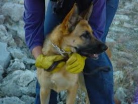 X Jornadas de Unidades Caninas de Salvamento en Cartagena