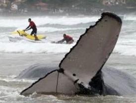 Muere una ballena tras dos días encallada en una playa de Río de Janeiro