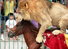 Toros y circo con animales, no; correbous con maltrato, sí ¿...?: la hipocresía nacionalista catalana