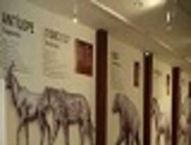 El Museo Etnográfico y Ciencias de la Naturaleza de Jumilla abre sus puertas con una exposición 'entomóloga'