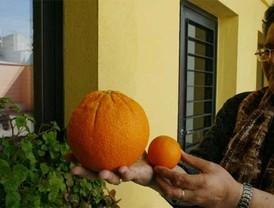 Julio Iglesias cantará en Moscú
