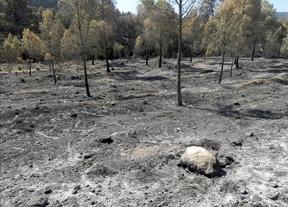 El Gobierno central tramita ayudas por el incendio de Hellín