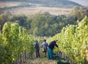 ASAJA exige que se aplique la ley y que se fije el precio de la uva