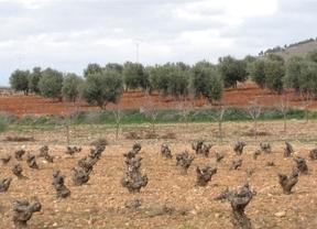 El sector, pendiente de los efectos de la derogación parcial de la Ley de la Viña y el Vino de Castilla-La Mancha