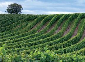 UPA prefiere esperar a la reforma de la PAC antes de tocar la Ley de la Viña y el Vino