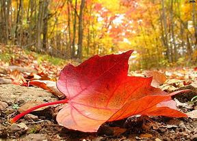 Bienvenidos al otoño: la nueva estación llega este sábado a las 16.49 horas