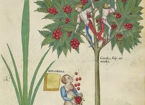Joyas bibliográficas de los siglos VIII y XVI llegan este lunes a Toledo