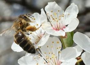 La cosecha 2013 alcanzó los 109.680 kilos de miel de la Alcarria