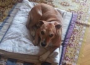 Sanidad confirma que ya se ha sacrificado a Excalibur, el perro de la paciente con ébola
