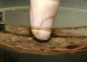 Encuentran un organismo que no ha evolucionado... ¡en 2.000 millones de años!