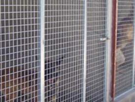 Ayuntamiento Alguazas consigue que casi medio centenar de perros vagabundos tengan un nuevo hogar