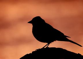 SEO/Birdlife celebra que todas las Autonomías vayan a luchar contra el veneno