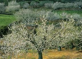 Las mejores rutas para disfrutar de los cerezos en flor