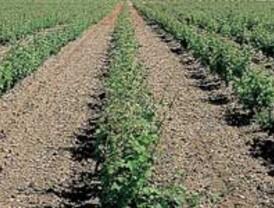 La DO Cigales modifica su reglamento para poder elaborar vinos espumosos y dulces