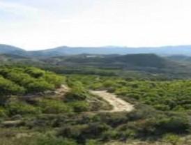 El Ayuntamiento de Murcia incrementa en un 150% la superficie forestal del municipio gracias a la gestión del PGOU