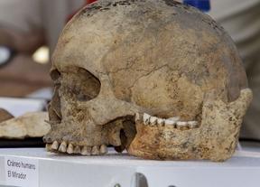 Cráneo hallado en Atapuerca