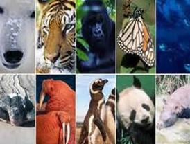 Extinción de especies aumenta enfermedades infecciosas