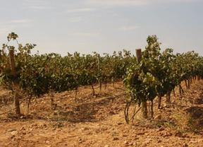 Viticultores de Villarrobledo se suman a las protestas por los bajos precios de la uva