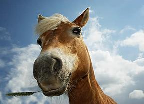 ¿Fraude o problema de salud?: Más de un 4% de la carne de la UE contiene caballo