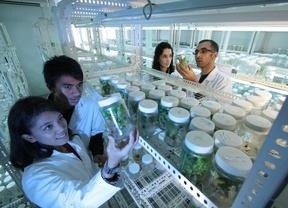 Ayudas ComFuturo para jóvenes investigadores
