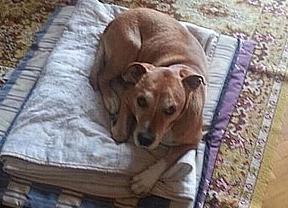 La Justicia madrileña rechaza admitir a trámite la querella por la muerte de Excalibur, el perro de Teresa Romero
