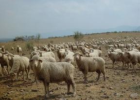 Cooperativas Agro-alimentarias pide a la consejera de Agricultura un apoyo