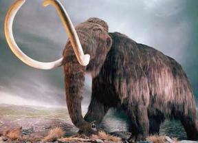 Rusia pretende clonar un mamut extinguido hace 4.000 años
