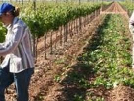 La Consejería de Agricultura reparte las ayudas agrarias europeas a 14000 agricultores y ganaderos