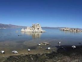 NASA descubre vida en el arsénico; replantea busqueda de vida extraterrestre