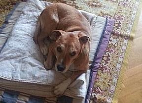 El 'caso perro Excalibur' se les va de las manos a los animalistas