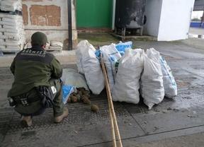 Agentes Medioambientales decomisan 360 kilos de piñas recogidas de forma fraudulenta en Madridejos