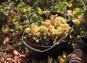 El sector del vino