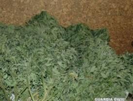 Absuelta una pareja de cultivar marihuana porque era para paliar la enfermedad de la mujer
