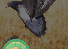 LIBRA: horóscopo 2013