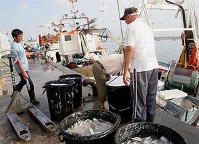 La cuota de pesca en España mejora: la misma merluza, más anchoa y menos jurel