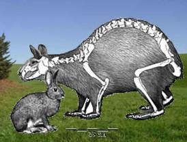 Érase una vez, en Menorca... conejos de 15 kilos (de peso)