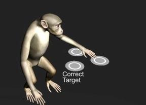 Monos que controlan ordenadores con la mente