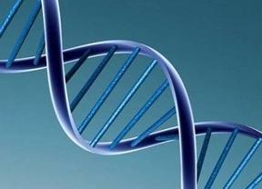 El ADN extraído de humanos no puede ser patentado