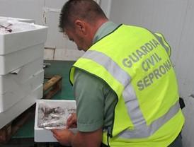 Decomisados 651 kilos de pescado inmaduro en Sevilla