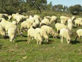 El Gobierno concede ayudas por 4,7 millones para agricultores y ganaderos