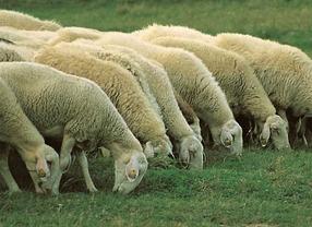 Piden tres años de prisión para los 'violadores' de gallinas y ovejas