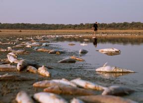 'Miles' de peces muertos en el embalse de Navalcán