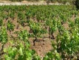 El sector vitivinícola de CyL lidera la implantación de páginas web y el panadero, el del uso de la factura electrónica
