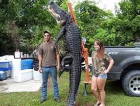 Un joven caza un caimán de unos 360 kilos con una caña de pescar