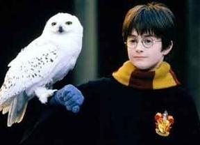 Denuncian al tour de Harry Potter por maltratar búhos y lechuzas