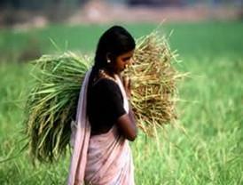FAO hace un llamado para cerrar brecha de género en la agricultura