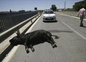 Se escapa un toro que iba a participar en un festejo en Talavera y hiere a 11 personas