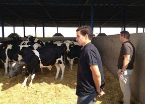 Los hermanos Cerezo apuestan por franquiciar la carne de ternera que ya abastece a medio Madrid