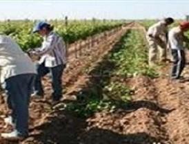 Asaja Murcia defiende la regulación de las prácticas comerciales en la cadena agroalimentaria