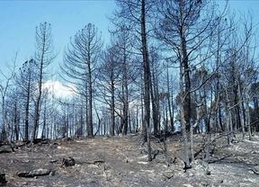 La región en estado de alerta a causa de cuatro incendios